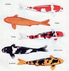 Types of Koi