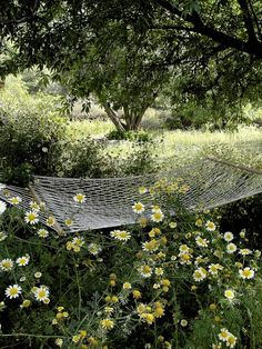 Hammock in a Daisy Field
