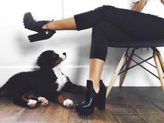 Ripped jeans, calça jeans, rasgada, black and white, preto e branco, boots, botas, dog, bernesse, bernesse mountain dog, cachorro, filhote, puppy, paws, patas, fur, pelos, brand, marca, moda, carol farina, shopcarolfarina.com.br