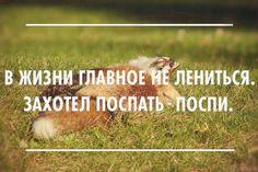 (5) Лента vo_elena