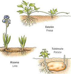 LA REPRODUCCIÓN EN PLANTAS