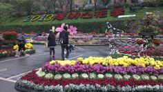 Yangmingshan Flower