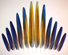 Macaw Feathers | Camelot Macaw, Sunshine, Tail Feathers Assembly