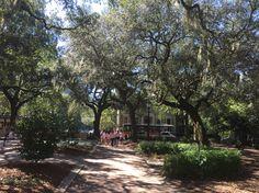Enjoying an afternoon walk through the squares of Savannah