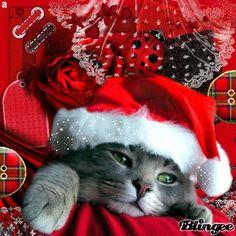 Christmas Cat,anuschkatim