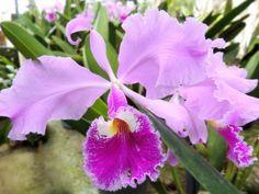 Landscape Photos, Vases, Nature, Paisajes, Animals, Growing Orchids, Plants