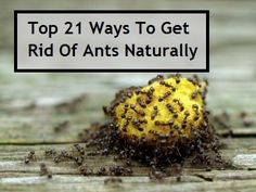 Top 21 ways to get rid of ants naturally - plus a lot of info. Thank you Herb and Oils World (on FB) for sharing this!