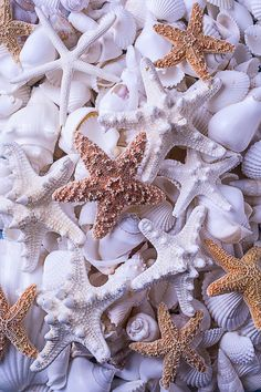 Orange And White Starfish Pink Beach and Shells Pearl Wallpaper, Ocean Wallpaper, Summer Wallpaper, Iphone Background Wallpaper, Colorful Wallpaper, Aesthetic Iphone Wallpaper, Aesthetic Wallpapers, Phone Backgrounds, Fond Design