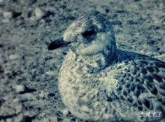 Bird - Lake Ontario.