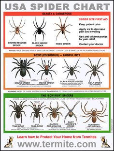Spider Identification Chart - From low risk to dangerous.