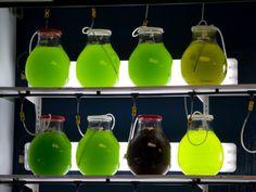 Growing algae project at Biocurious -> https://sites.google.com/site/biocuriousalgaegroup/home