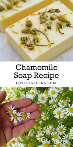 Natural Chamomile Soap Recipe + soap making instructions Natural chamomile soap recipe with essential oil, chamomile flowers and of course yellow using annatto seeds Soap Making Recipes, Homemade Soap Recipes, Diy Cosmetic, Savon Soap, Homemade Cosmetics, Shampoo Bar, Cold Process Soap, Home Made Soap, Handmade Soaps