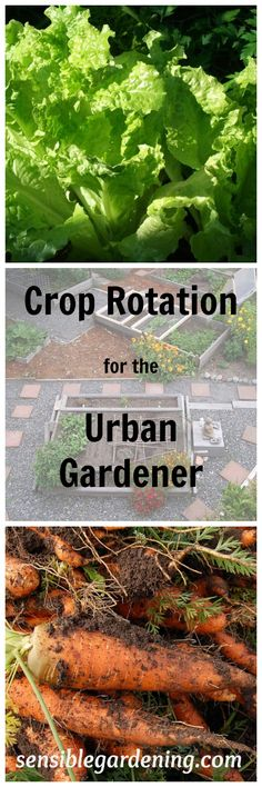 Crop Rotation for the smaller urban garden with Sensible Gardening