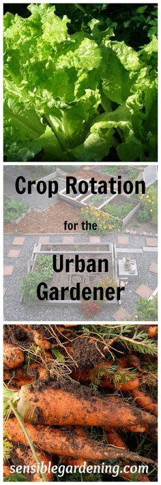 Crop Rotation for the smaller urban garden with Sensible Gardening