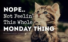 Funny Monday Quotes, Nope Not Feelin' This Whole Monday. Monday Morning Quotes, Happy Monday Quotes, Monday Humor Quotes, Your Smile, Make You Smile, Monday Inspirational Quotes, Good Monday, Have A Great Day, Be Yourself Quotes