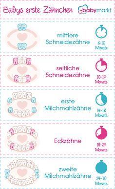 When do babies get teeth?de Guide Spiele/Kinder - When do babies get teeth?de Guide Spiele/Kinder Imágenes efectivas que le proporcion -