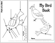 My Bird Book