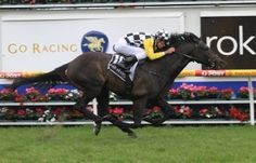 Champion Australian middle-distance horse, SO YOU THINK (NZ) Dk b/br h 2006, High Chaparral (Ire) - Triassic. Back to back winner of the G1 W.S.Cox Plate in 2009 and 2010 among more than 12 other wins and Australian Horse of the Year in 2010. In May 2011, he opened his international career, winning the G3 Mooresbridge Stakes at The Curragh by 12 lengths. Wins in the G1 Tattersall Gold Cup and Eclipse Stakes followed. He is due to be retired at the end of this northern season.