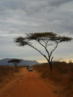 Kenya, Africa :)  the perfect African tree!!