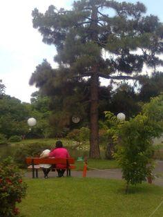 Golf Courses, Garden, Gardens, Garten, Lawn And Garden, Gardening, Outdoor, Yard, Tuin