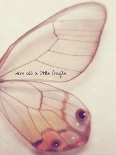 we are all alittle fragile. #butterflies #quotes