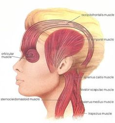 Cervicogenic migraines can profit from non-intrusive treatment since the head ache is as a rule hailing from the neck or cervical spine.