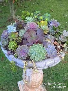 Another succulent arrangement in a birdbath. #LandscapingIdeas #GardeningLandscaping