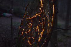 Bioluminescent Forest : tronc d'arbre http://positivr.fr/bioluminescent-forest-projections/