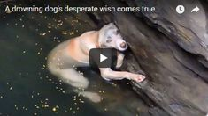 Drowning Dog Desperately Hangs On In The Hope Of Being Saved – Now Watch When He Sees The Rescuers.