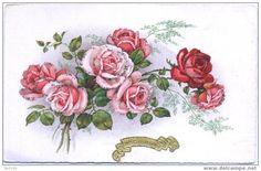 SAINTE CATHERINE Roses - Unclassified