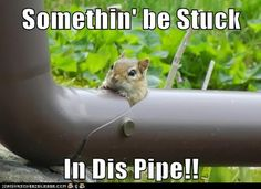 If you think you have something stuck in your drains, give the professional plumbers at Dial 1 Johnson Plumbing a call! Don't try to do it yourself!