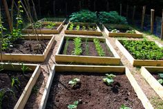 We have also rather retentively started a spreadsheet to calculate the economics of growing your own. This is not to prove that it is cheaper, ...