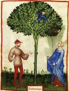 It's About Time: MANDRAKE - Growing & harvesting flowers, nuts, herbs, fruits & vegetables in 1400s illuminated manuscripts