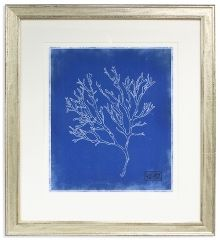 Art Gallery at Maine Cottage | Blue Coral 1 by Elizabeth Ockford