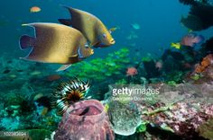 coral reef - Google Search