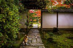 "ileftmyheartintokyo: "" momiji '14 - autumn foliage #12 (Konpuku-ji temple, Kyoto) by Marser on Flickr. """