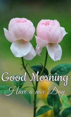 Good Morning Images with flowers for lovers Good Morning Beautiful Flowers, Good Morning Images Flowers, Latest Good Morning Images, Good Morning Roses, Good Morning Sunshine, Morning Pictures, Morning Pics, Cute Good Morning Quotes, Good Morning Cards