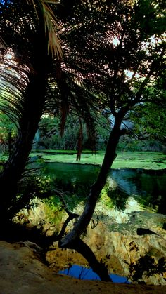 Πρέβελη - Κρήτη, Φοινικόδασος
