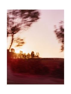 Moroccan Sunset Trees by Sara Press for Minted