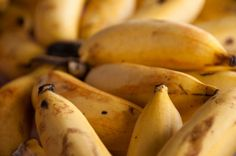 Produção de banana - principais variedades tradicionais e híbridas #cursoscpt