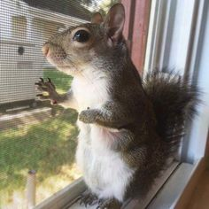 99 Most Popular Animal Pictures Around the World - Cutest Paw Squirrel Pictures, Animal Pictures, Hamsters, Nutty Buddy, Baby Animals, Cute Animals, Cute Photography, Little Critter, Chipmunks