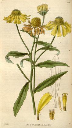 floral botanical...