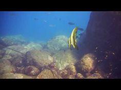ミカヅキツバメウオも観られる熱海沖初島のダイビング