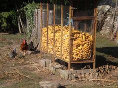Harvested corn - very rural scene
