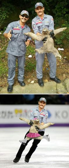 The internet is no stranger to Photoshop Battles. They are probably the best thing about the internet, too. All sorts of Donald Trump and awesome animal pictures distorted and edited by hilarious Photoshop artists. Super Funny, Funny Cute, The Funny, Funny Koala, Funny Animals, Koala Meme, Funny Sloth, Best Funny Photos, Funny Pictures