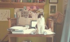 Interrupted study