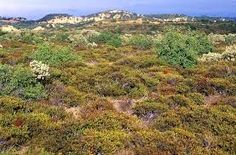A chaparral is a major terrestrial biome.