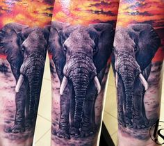 31 best african elephant tattoo images on pinterest elephant rh pinterest com african elephant tattoo african elephant tattoo meaning