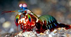 This Shrimp Packs a Mean Punch!   Composites Manufacturing Magazine