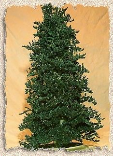 Miniature Christmas Tree tutorial - truly unique, uses caspia (dried plant material) | Source: Anne's Minis